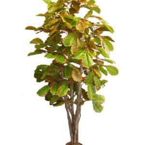 Strom umelý - Buk