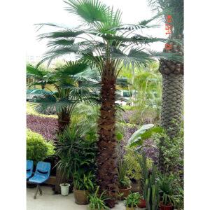 Strom umelý - Palma